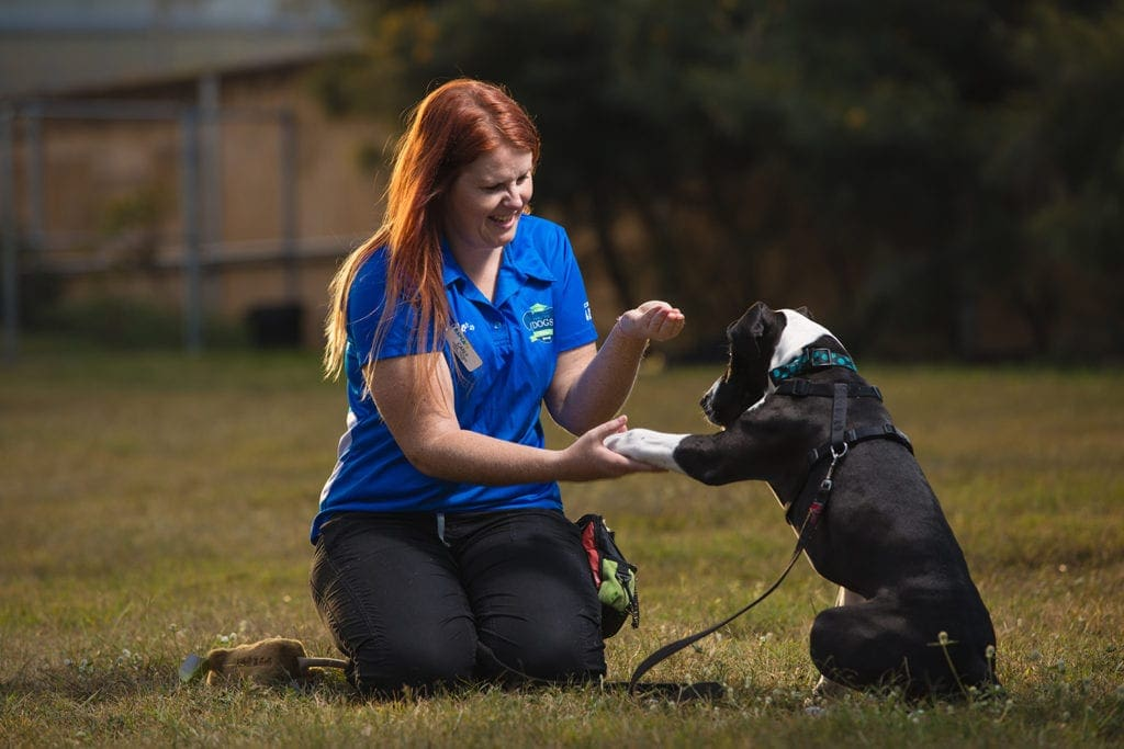 off leash dog parks brisbane training