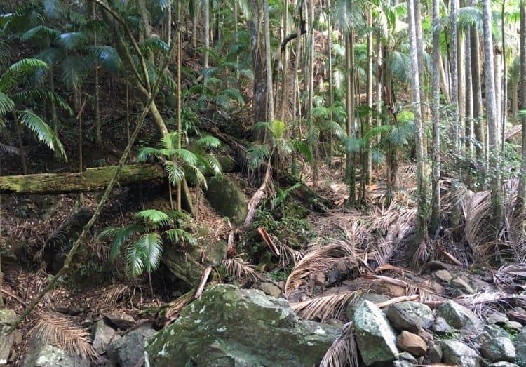 Gold Coast to Byron Bay Mt Tamborine 3