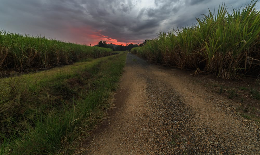 Family Friendly Camping Murwillumbah Storm Sunset In Cane Field
