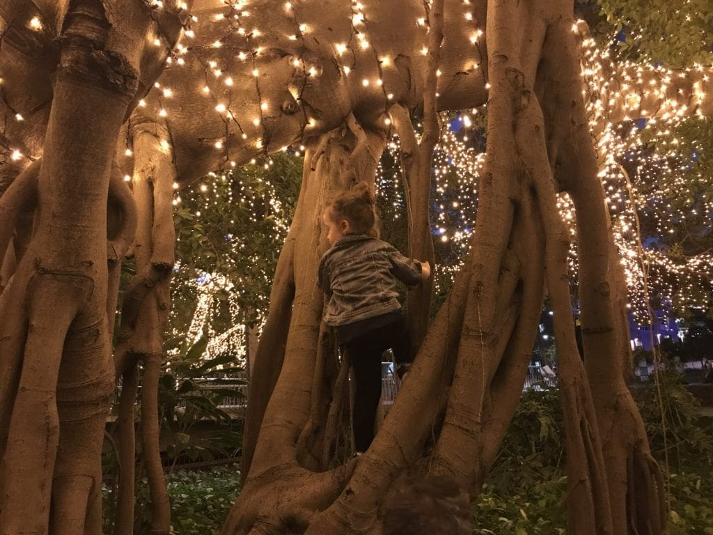 brisbane botanic gardens lights