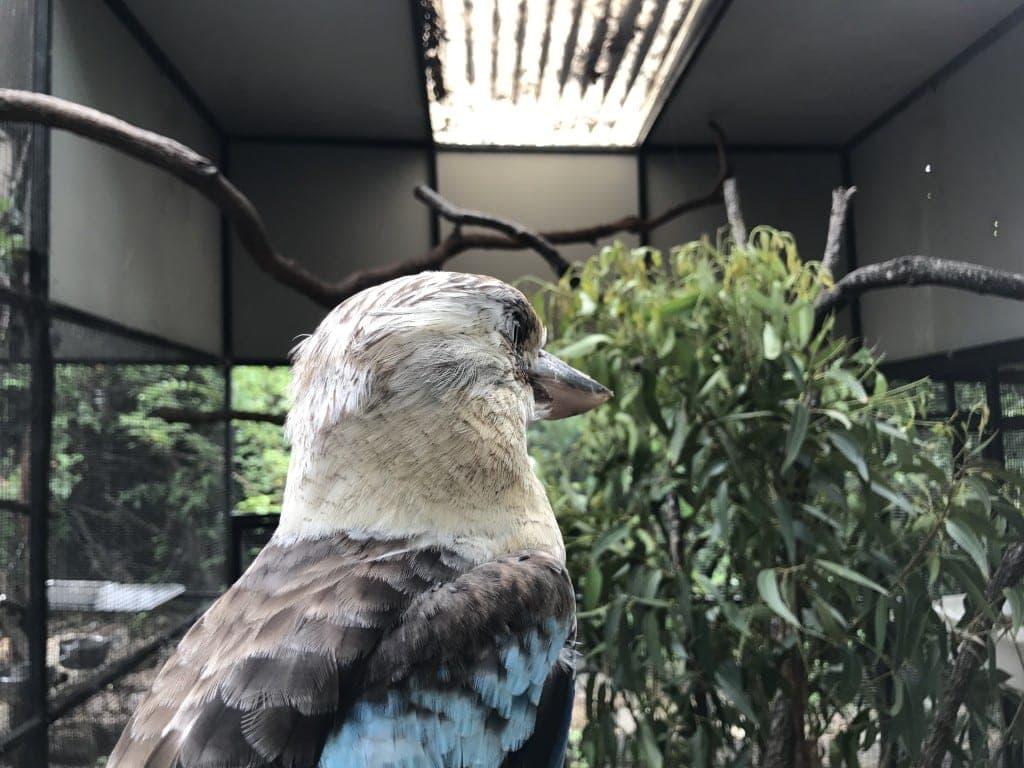Gold Coast Zoo feature