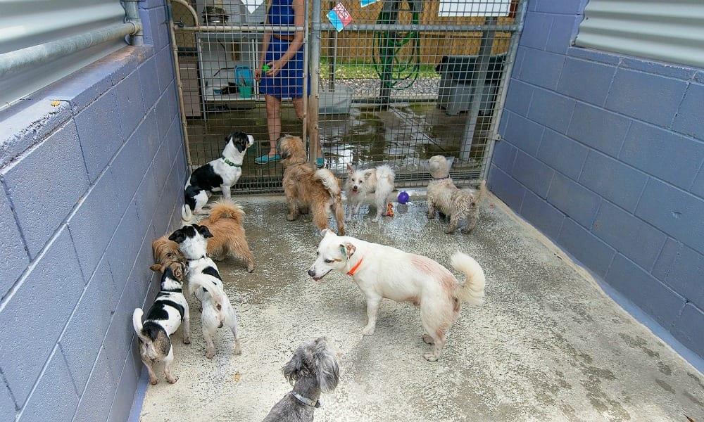 animal welfare league 3