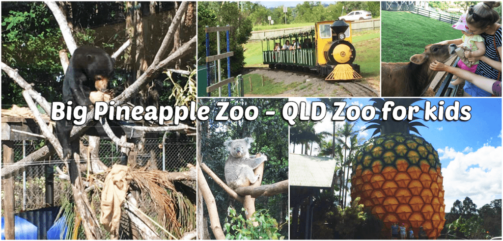 things to do in noosa with kids big pineapple