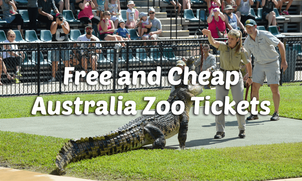 things to do in noosa with kids australia zoo