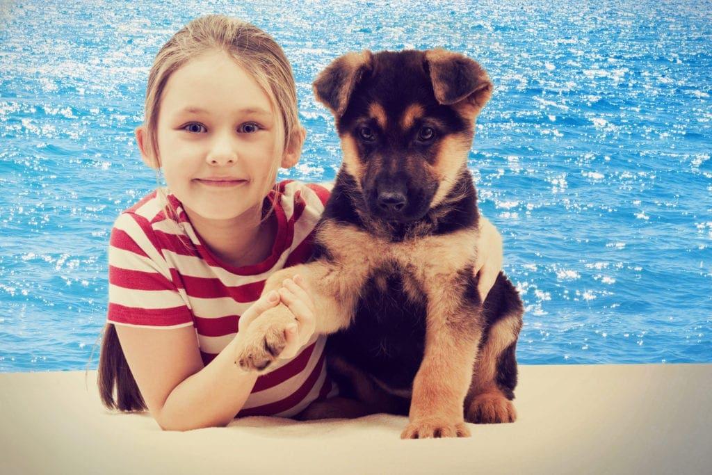 Gold Coast pound family pet