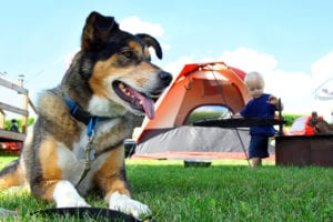 dog friendly camping options