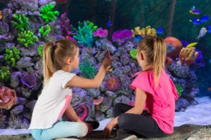 Sea Life Finding Dory and Friends children interact with dory display