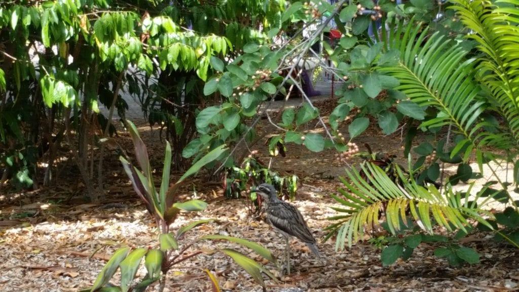 Bird Watching in Brisbane City Botanical Gardens