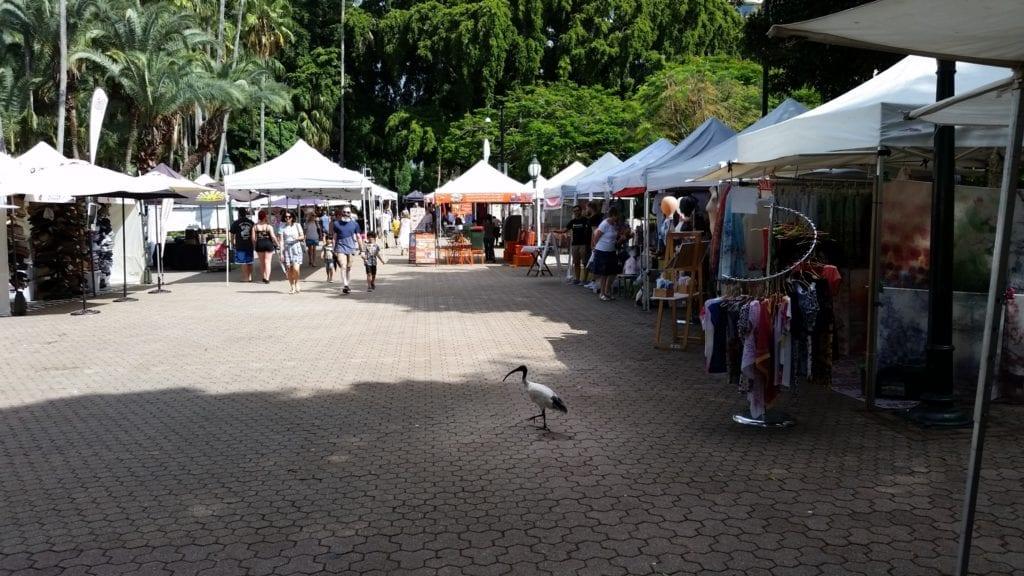 Bin Chicken at the markets in Brisbane City