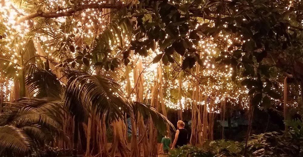 Brisbane City Botanical Gardens Fairy LIghts Display