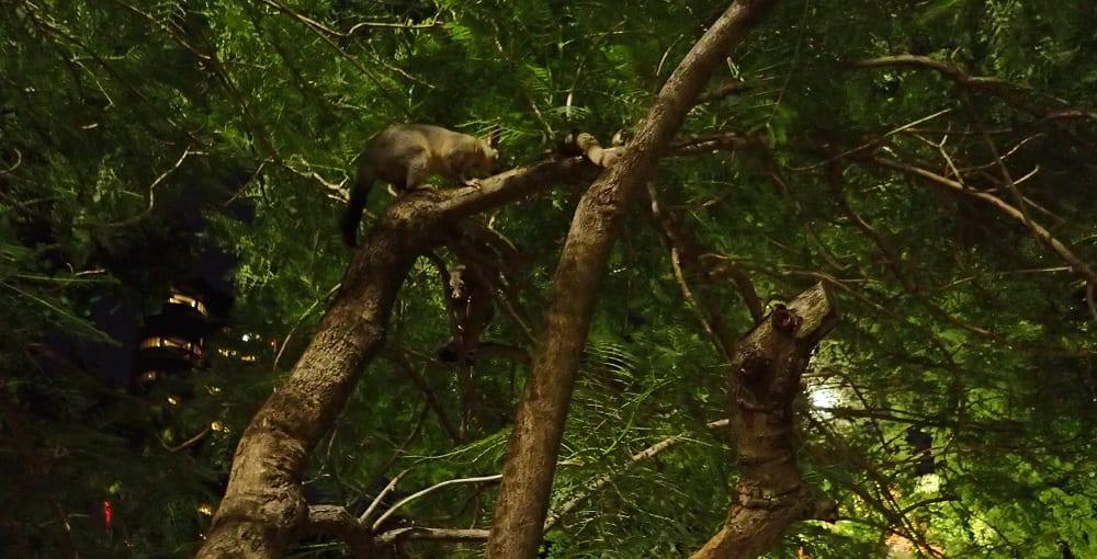 Take Kids Possum Spotting in Brisbane Botanical Gardens