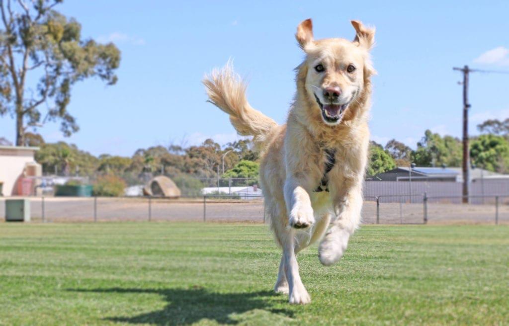 off leash parks brisbane labrador