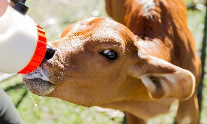farm stays Brisbane
