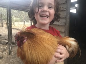 cedar glen farmstay chicken