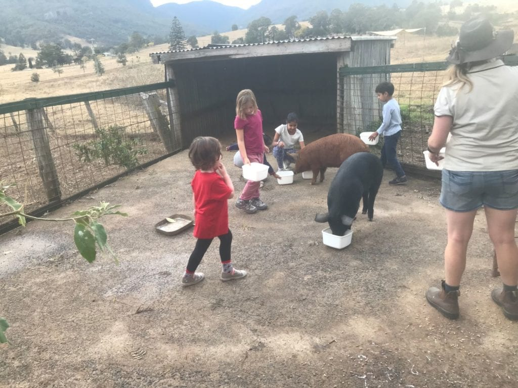 cedar glen farmstay pigs
