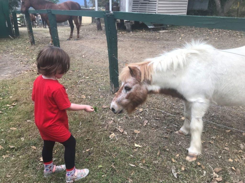 cedar glen farmstay pony