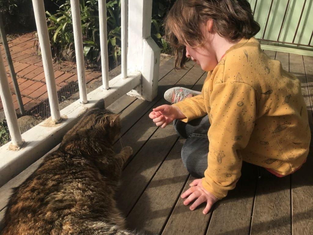 cedar glen farmstay cat
