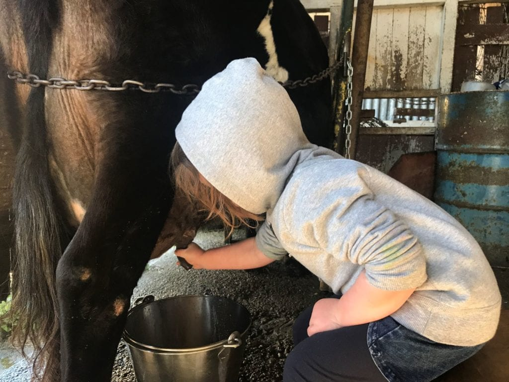 cedar glen farmstay milking