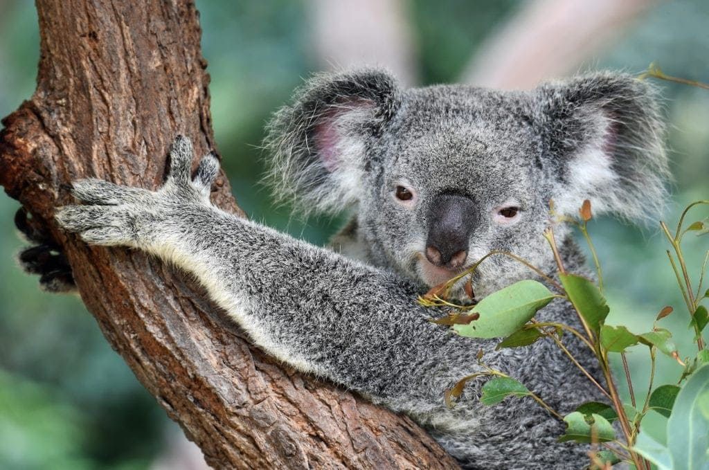 Australia for Nature Lovers