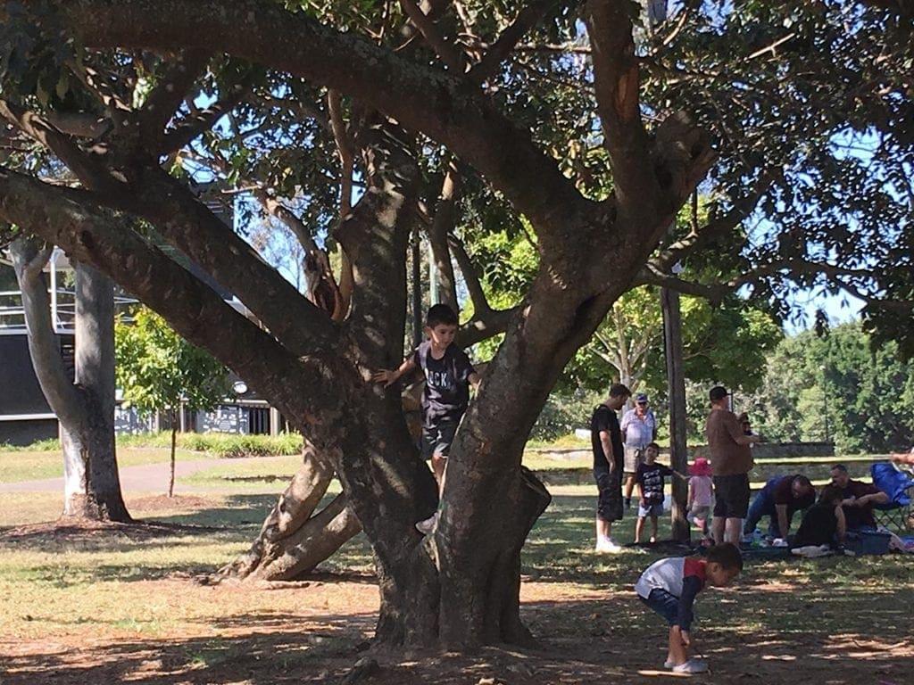 Bischof Pioneer Park
