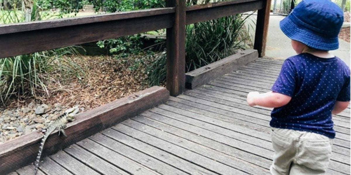 Toddler chasing a lizard at Ipswich Nature Centre