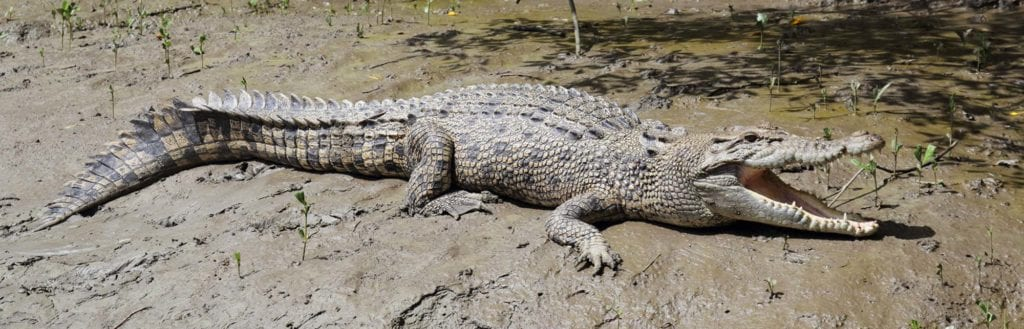 crocodile-tour-whitsundays Airlie Beach with kids