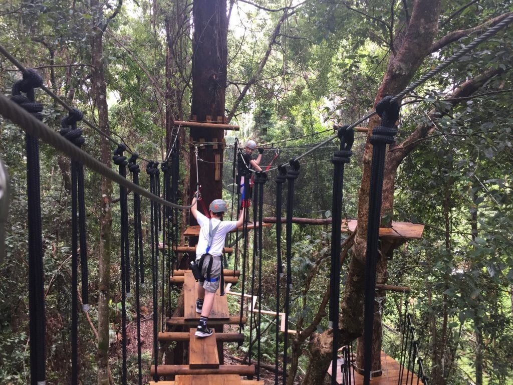 Treetop Challenge Easy Level