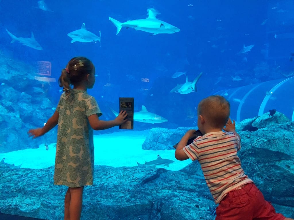 SEA Aquarium things to do in singapore with kids