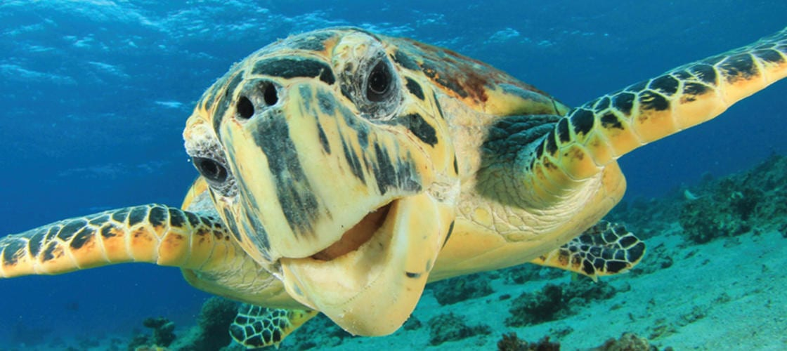 Wildlife Eco Bay Cruise from Airlie Beach