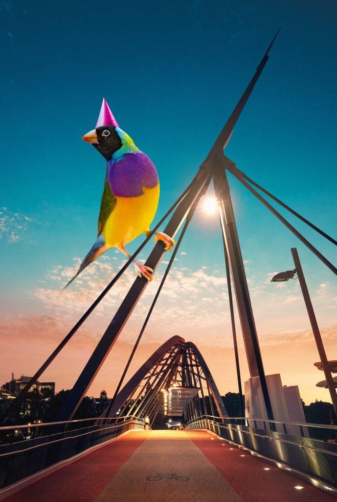 Messengers of Brisbane