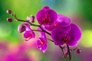 orchid nurseries brisbane