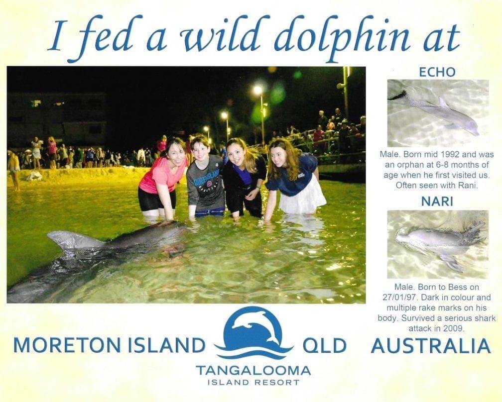 Dolphin Feeding Tangalooma