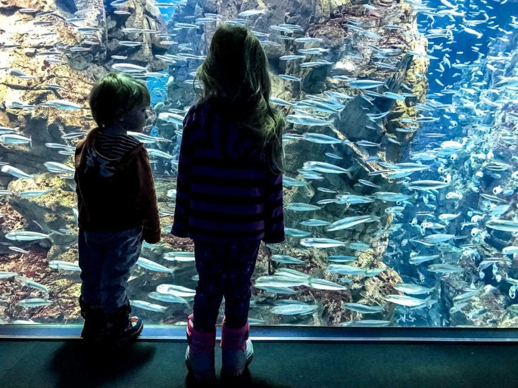 osaka with kids aquarium