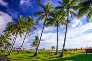 Tangalooma Palm Trees