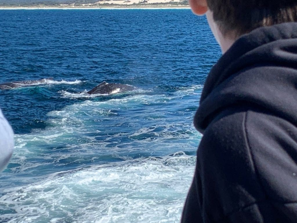 Whale sighted
