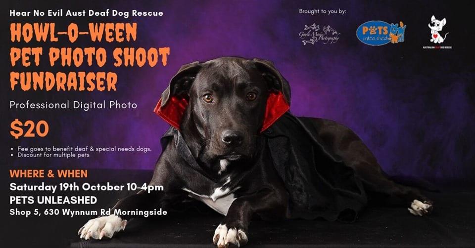 Halloween Pet Photo Shoot at Pets Unleashed Brisbane