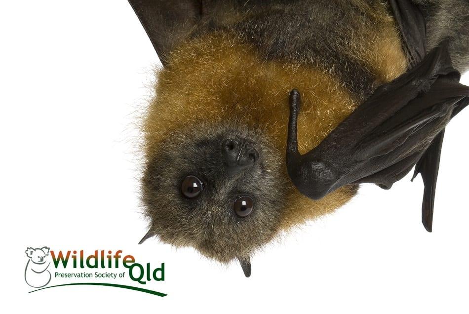 Batty Halloween | Logan West