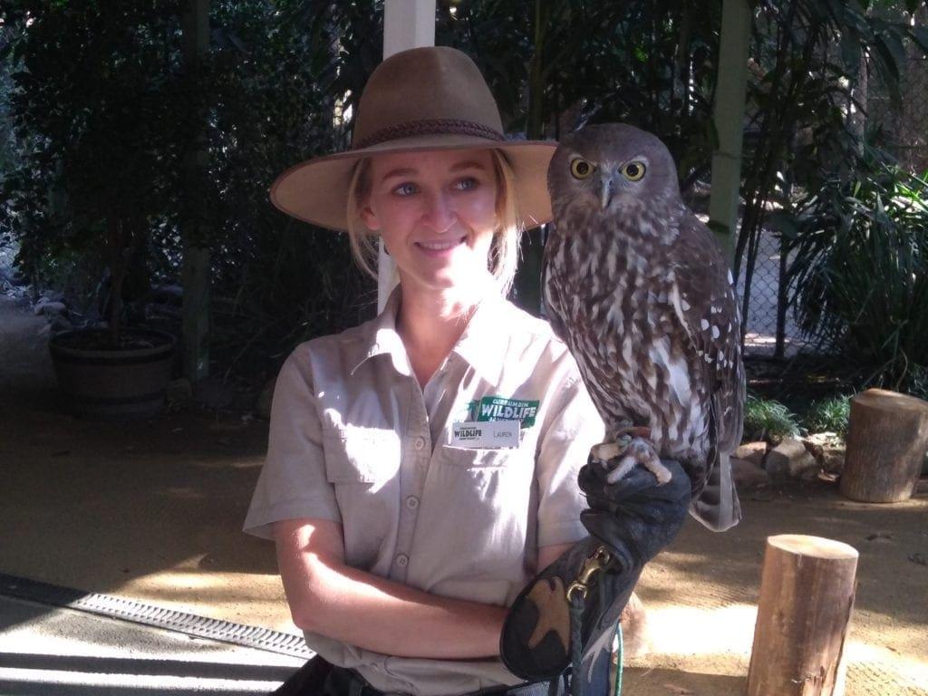 Owl at Currumbin Wildlife Sanctuary