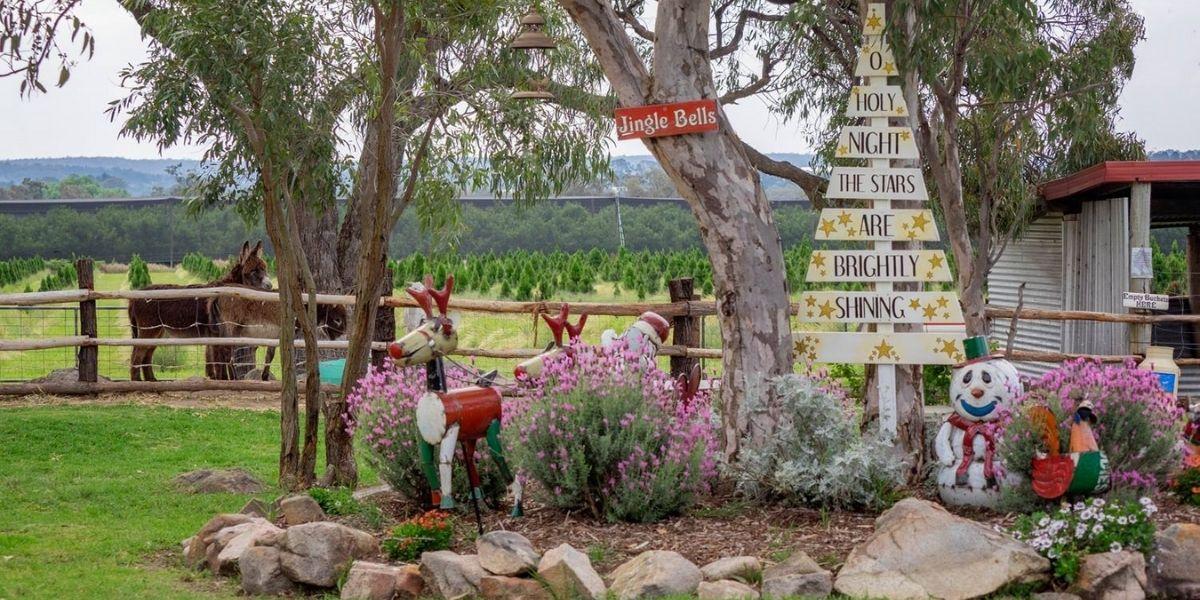 Granite Belt Christmas Farm