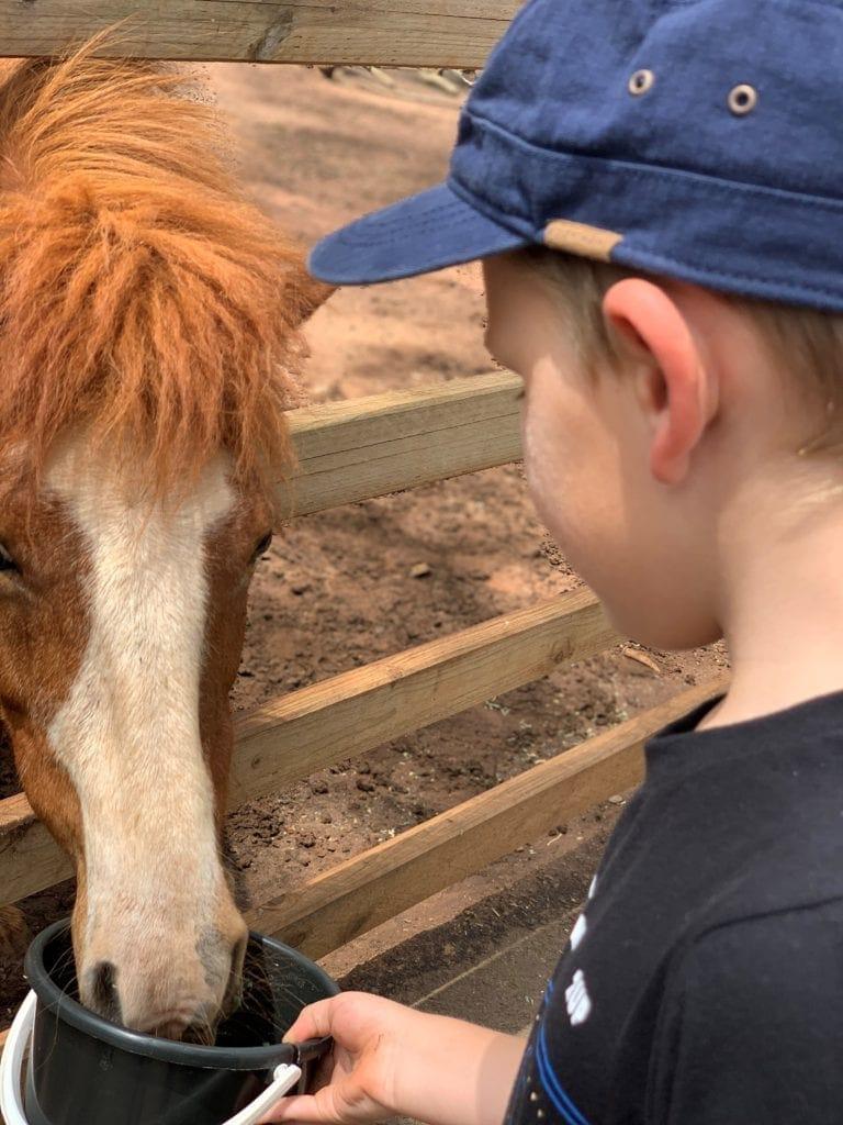 Pony at White Ridge Farm