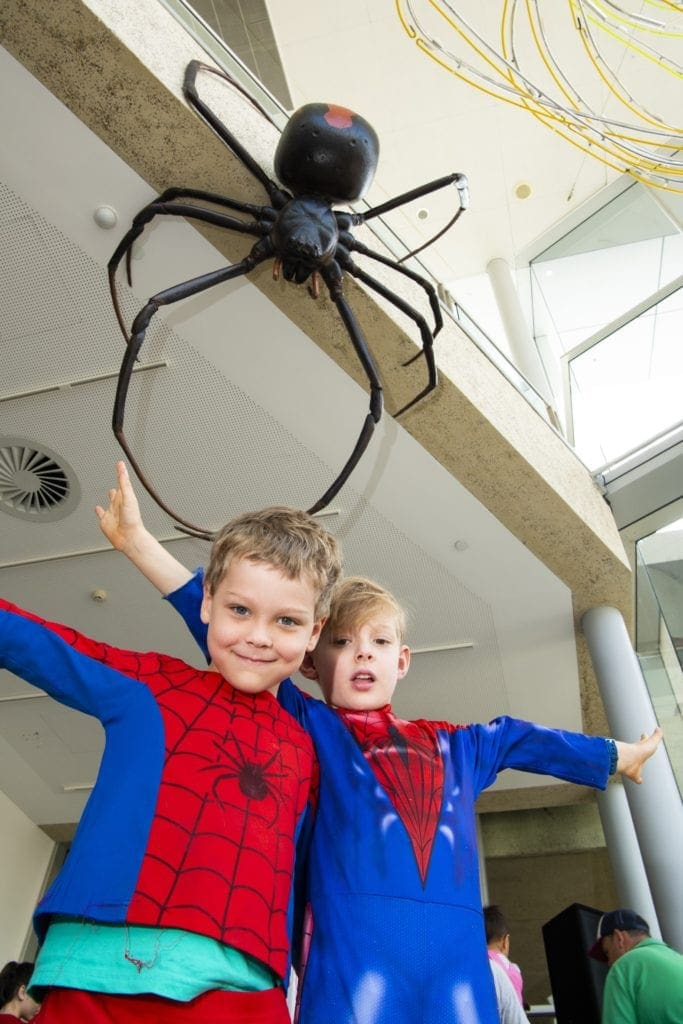 Spiders - The Exhibition