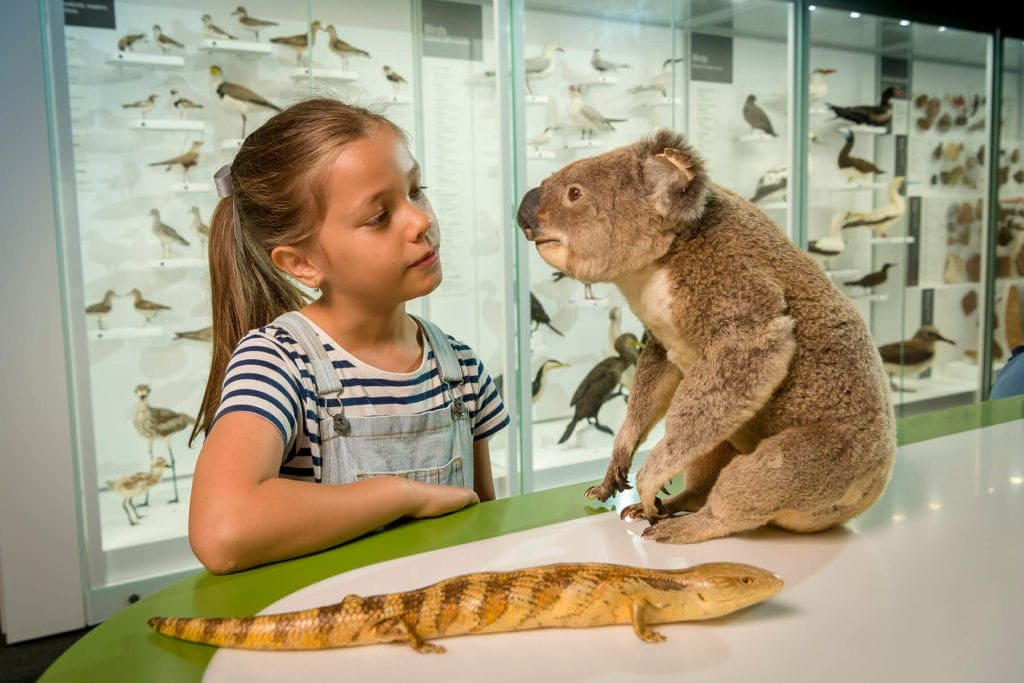 Discovery Centres Queensland Museum