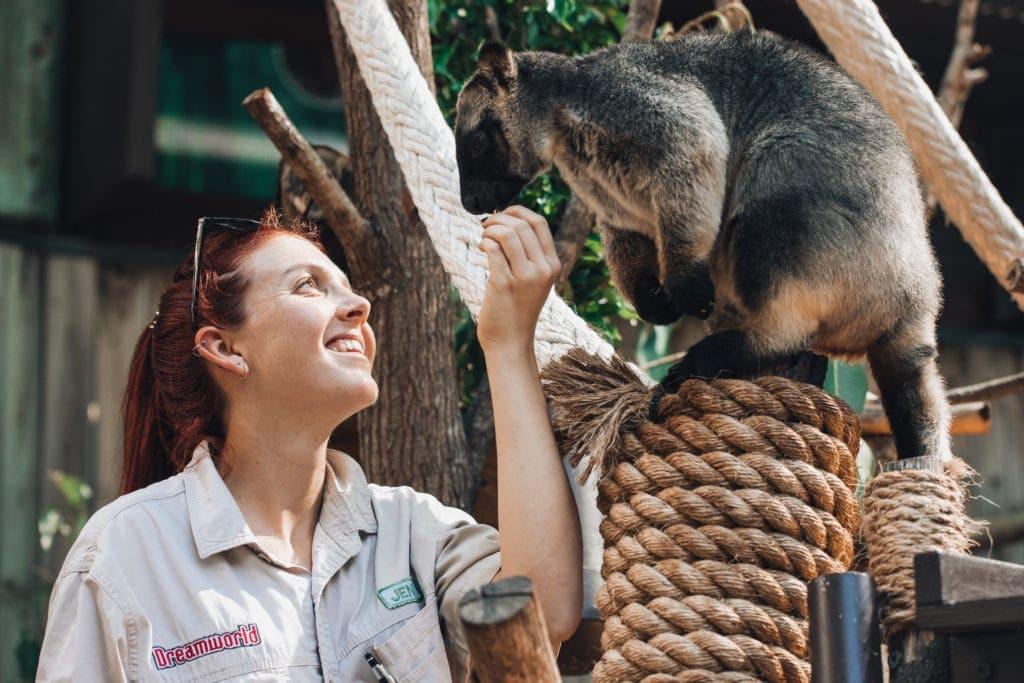 DW Tree kangaroo talk