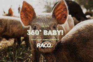 EKKA 2020 360 BABY