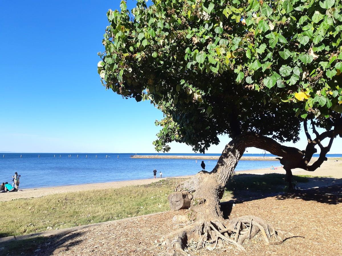 Lower Moora Park - climbing tree