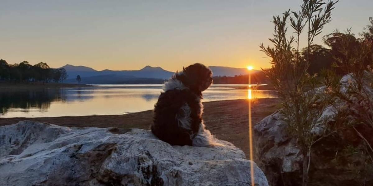 Camp Moogerah Dog Sunset