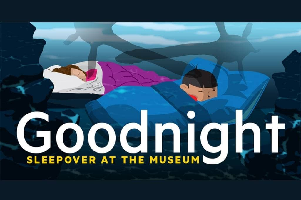 Sleepover at the Queensland Museum