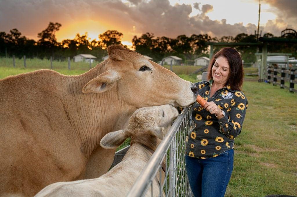 Taste farm life in regional Queensland Splitters Farm Bundaberg cows at sunset
