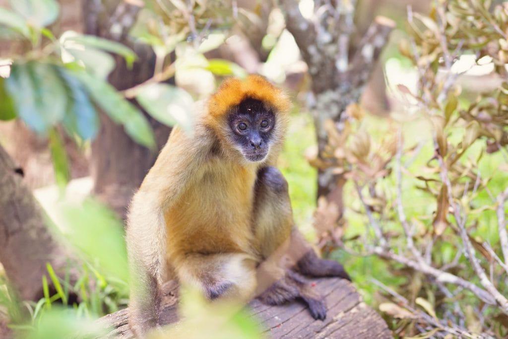 Primate at Wildlife HQ Zoo