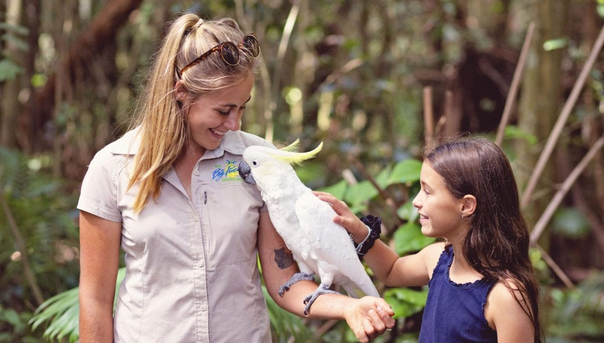 Wildlife HQ Zoo cockatoo